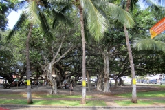 Largest Banyan Tree in the state of Hawaii