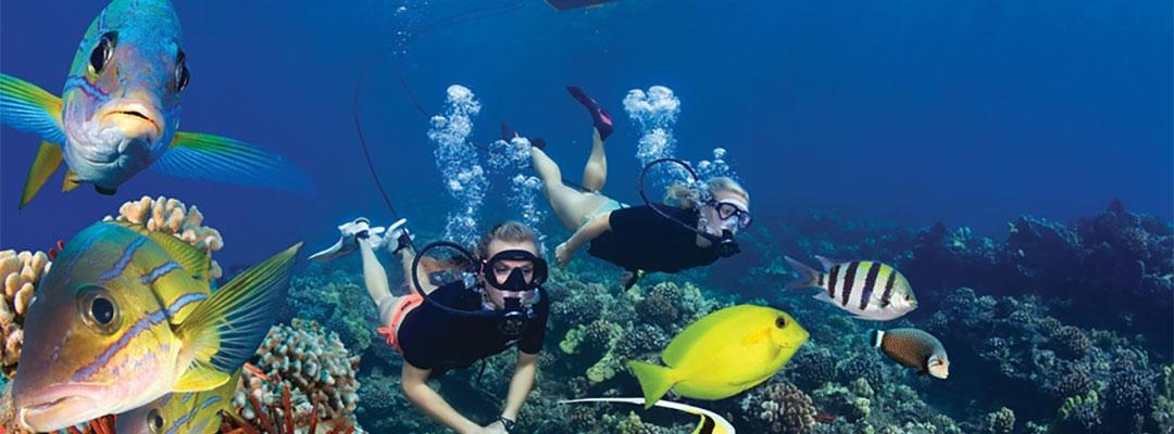 Brag Worthy Diving On Maui